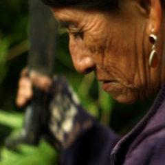 LACLA Presenta:Cine Sin Fronteras: 'Refugio' y 'La Selva Negra'