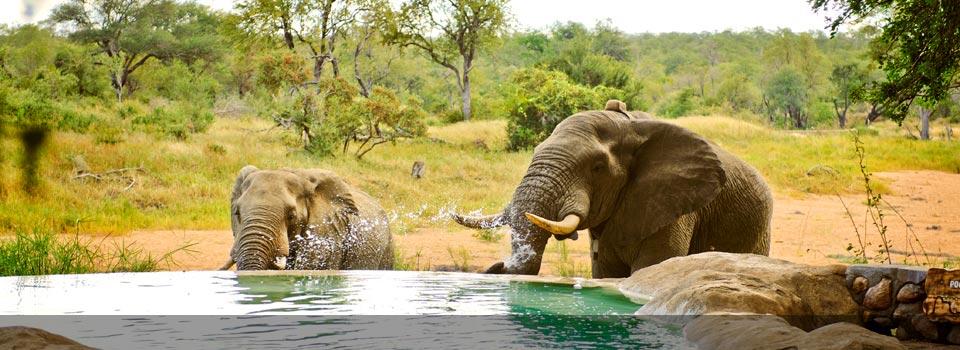 TIMBAVATI.ELEPHANT