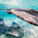 Let's Get #Wanderlust | Grand Cayman