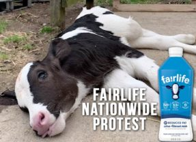 Nationwide Protests Call For Coca-Cola to Drop Fairlife Dairy Brand Following Horrific Animal Abuse