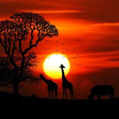 Let's Get #Wanderlust in Kenya